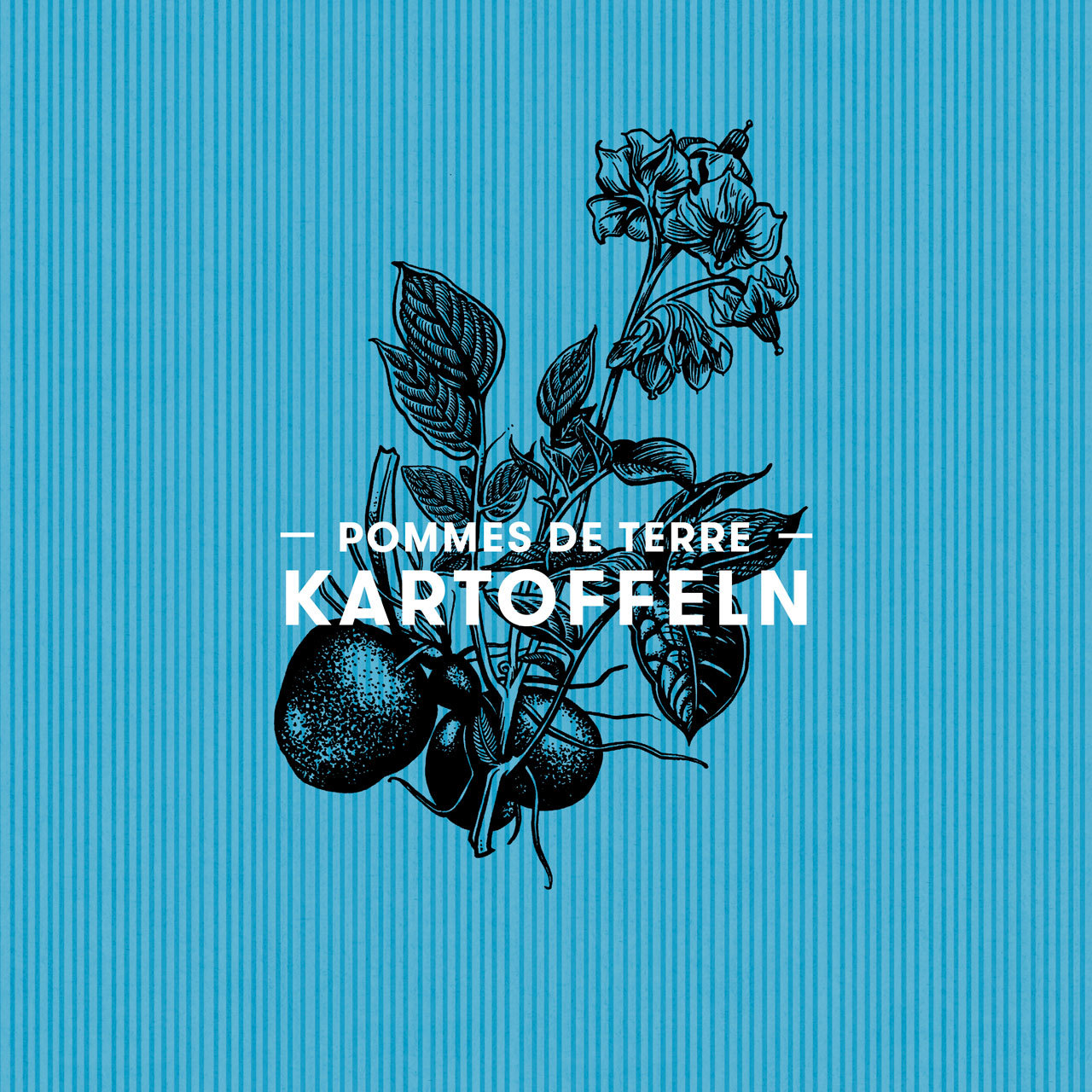 Volg Kartoffeln Packaging Design 00 MHG Bern