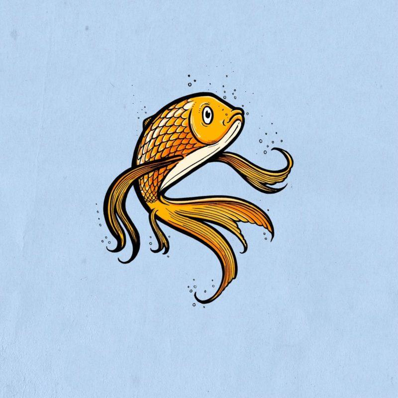 Tierzeichnungen Goldfisch MHG Bern